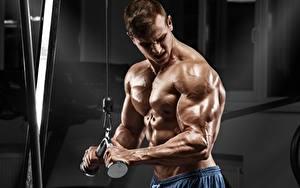 Фото Мужчины Бодибилдинг Мускулы Рука Тренировка спортивные
