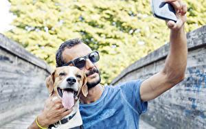 Фотографии Мужчины Собаки Очков Смартфон Ретривер Языком Селфи Бигля
