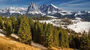 Фотография Горы Италия Пейзаж Снеге Дерево Альпы South Tyrol, Dolomites, Langkofel Природа
