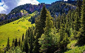 Фотография Горы Скала Дерева Naryn, Kyrgyzstan Природа