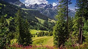 Обои Горы Швейцария Пейзаж Дерево Альп Траве Sanetschhore