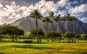 Фотография Горы Тропики Гавайи Пальмы Газоне Дерева