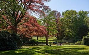 Картинка Нидерланды Парки Деревья Трава Graveland