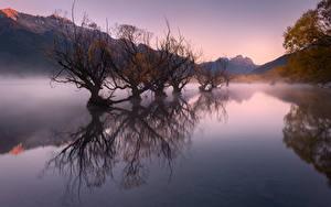 Обои Новая Зеландия Осенние Озеро Гора Туман Деревьев Glenorchy, Lake Wakatipu