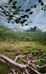 Фотография Норвегия Горы Леса Ветки Траве Northern Norway Природа