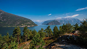 Обои для рабочего стола Норвегия Горы Деревья Hardangerfjorden Природа