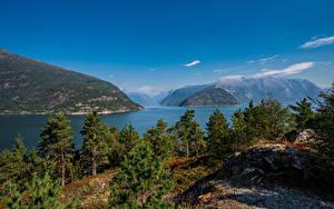 Фотография Норвегия Горы Деревья Hardangerfjorden Природа