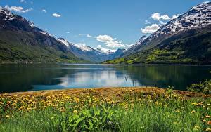 Фотографии Норвегия Гора Лето Одуванчики Фьорд Nordfjord