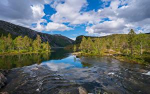 Фото Норвегия Парк Реки Гора Облако Дерева Rago National Park Природа