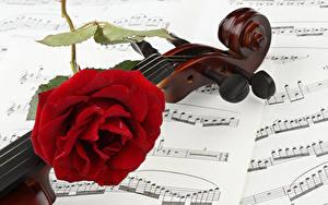 Картинка Ноты Роза Вблизи Скрипки Красная цветок