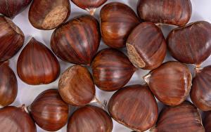 Фотографии Орехи Лесной орех Вблизи