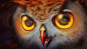 Фотография Совообразные Глаза Рисованные Вблизи Клюв Смотрят Животные