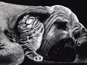 Фотографии Рисованные Собака Кошка Черно белое Двое Спит Забавные Friends Животные
