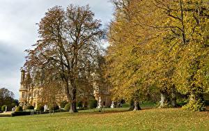 Фотографии Парки Осенние Англия Деревья Листья Waddesdon Manor Природа