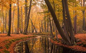 Обои Парки Осень Голландия Пруд Деревья Листва Voorstonden