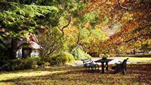 Фотографии Парк Осенние Дерево Листья Скамейка Стола Природа