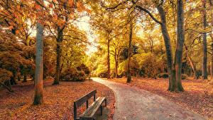 Фото Парки Осень Великобритания Скамья Деревья Уэльс Природа