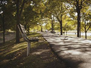 Картинки Парк Скамейка Тротуар Деревья Природа
