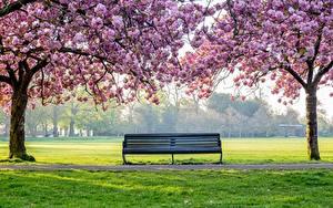 Фото Парк Цветущие деревья Дерево Траве Скамья