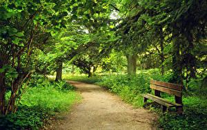 Картинка Парки Лето Скамья Деревья Природа