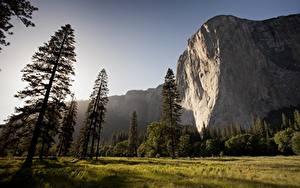Картинка Парки Штаты Горы Йосемити Скале Трава Дерево mount El Capitan
