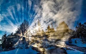 Картинка Парки Штаты Зимние Йеллоустон Снега Дерево Лучи света Тумане Природа