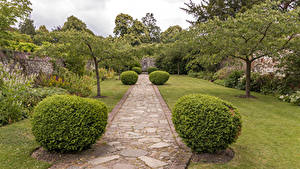 Обои Парки Великобритания Деревья Кусты Газон Greys Court