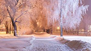 Обои для рабочего стола Парк Зимние Ночные Дерево Снега город