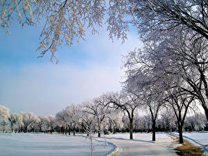 Фотография Парк Зима Небо Дерева Снега Природа