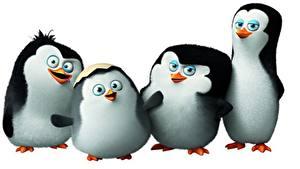 Картинки Пингвины Четыре 4 Penguins of Madagascar 2014 мультик Животные