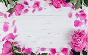 Обои Пионы Лепестков Шаблон поздравительной открытки Розовый Цветы