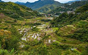 Фото Филиппины Горы Поля Деревьев Banaue rice terraces, Ifugao
