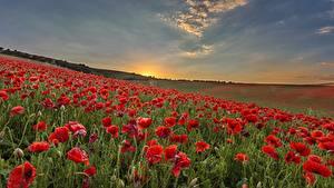 Фотографии Мак Рассветы и закаты Поля Цветы Природа