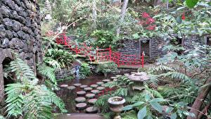 Обои Португалия Парки Тропики Пруд Monte Madeira Islands Природа
