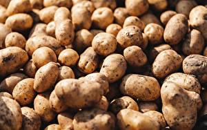 Обои Картошка Вблизи Много Пища
