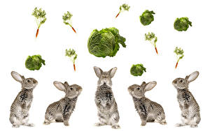 Фотографии Кролики Капуста Морковь Белый фон Животные