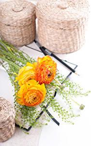 Картинка Лютик Белом фоне Трое 3 Желтый цветок