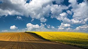 Картинки Рапс Поля Небо Облачно Природа