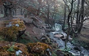 Фотография Река Мост Камни Англия Мха Деревьев Grindleford, Derbyshire Природа