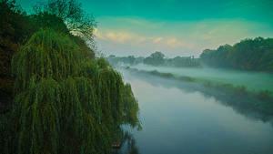 Фото Речка Тумана Деревья Мультики