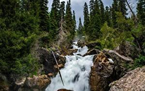 Картинки Речка Водопады Дерева Скала Kara-Kamysh, Kyrgyzstan