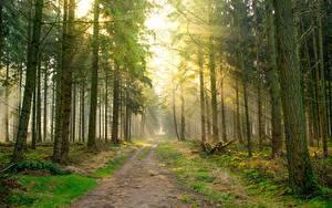 Картинка Дороги Лес Лучи света Дерева