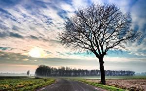 Фотография Дороги Небо Дерево