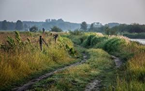 Фотографии Дороги Лето Утро Трава
