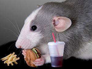 Фотография Грызуны Мыши Гамбургер Картофель фри Быстрое питание Стакана Морда животное
