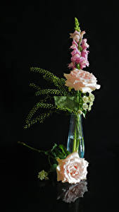 Обои для рабочего стола Роза Антирринум На черном фоне Ваза Цветы