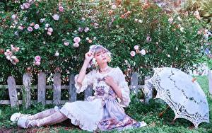 Картинки Роза Азиатки Траве Ограда Кусты Зонтом Сидит Руки Позирует молодые женщины