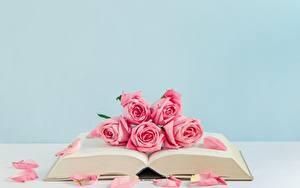 Картинки Роза Книги Розовые цветок