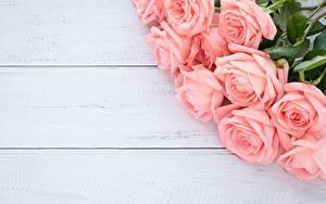 Фотографии Розы Букет Розовый Доски Шаблон поздравительной открытки Цветы