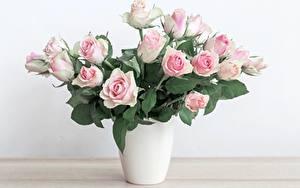 Картинки Роза Букеты Ваза Цветы